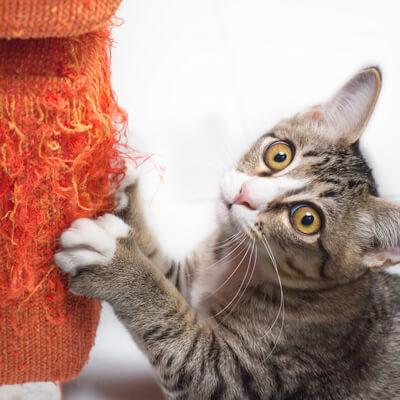 Destructive cats