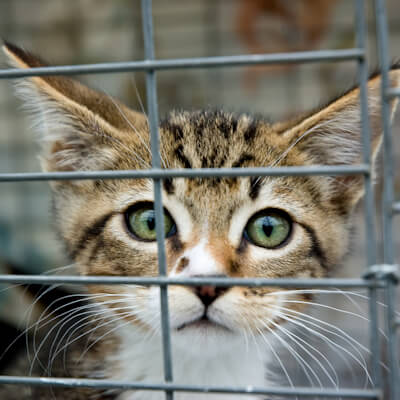 Choosing a cattery