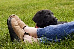 Health insurance for your dog
